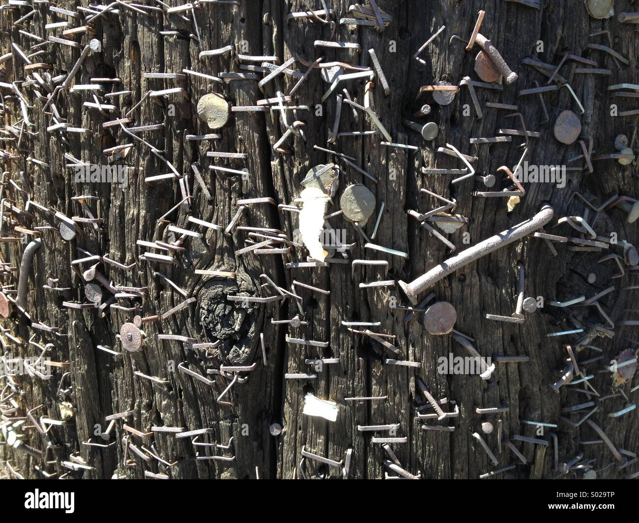 Nails and staples in a telephone pole create an interesting pattern - Stock Image