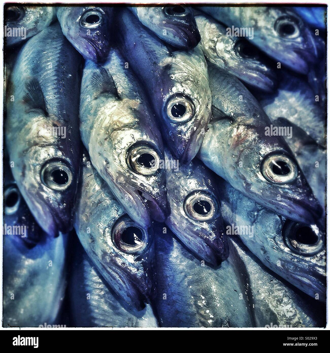 Sardines fishes close up on a market in Barcelona, Catalonia, Spain Stock Photo