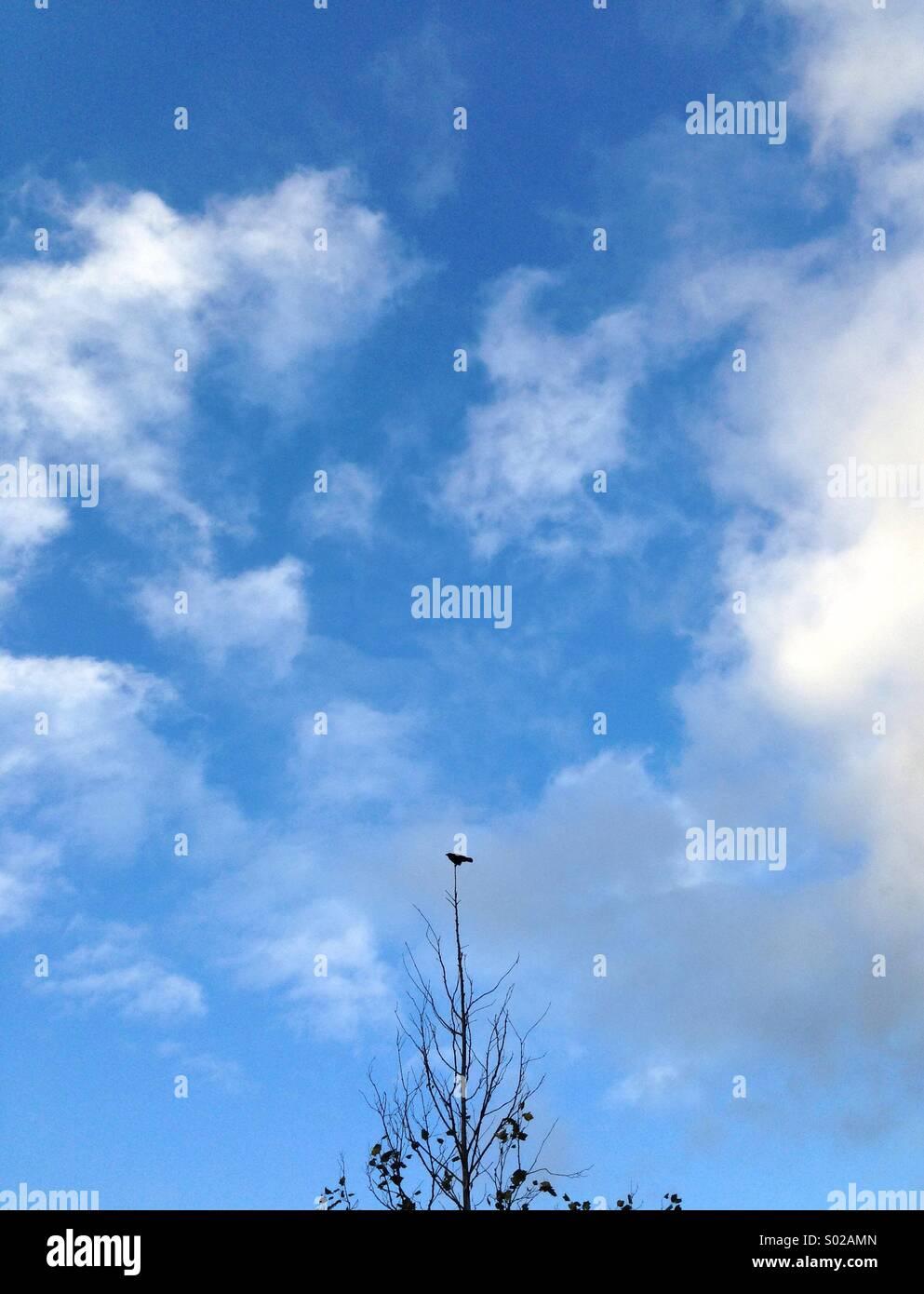 Bird on a tree - Stock Image
