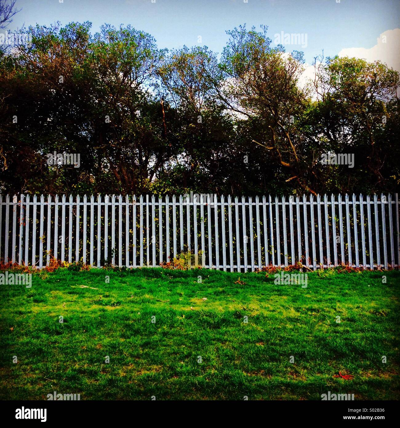 White fence and trees - Stock Image