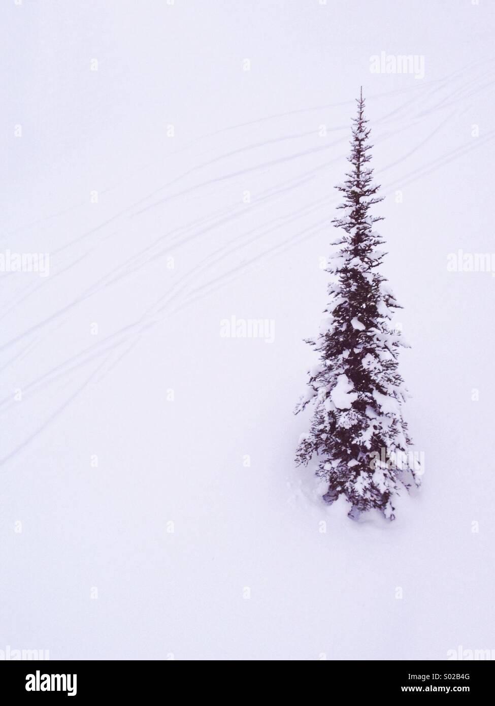 Lone tree and ski tracks - Stock Image
