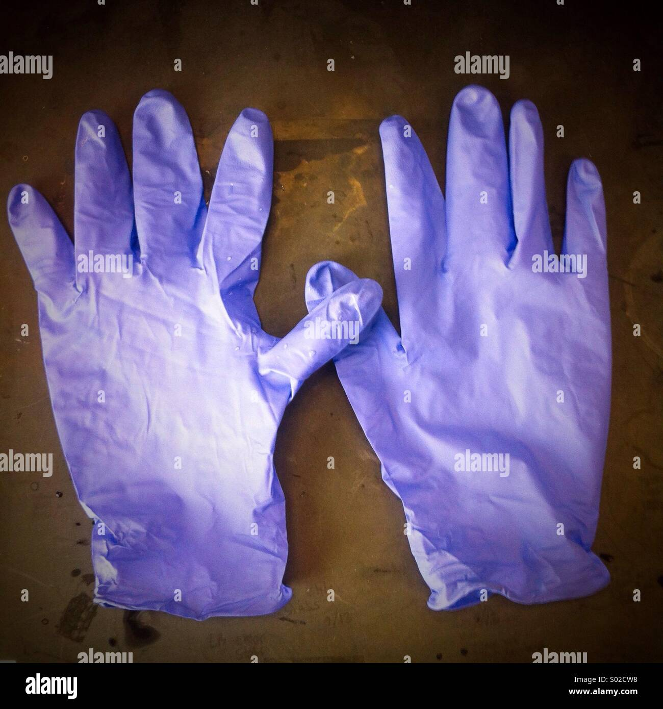 Purple gloves - Stock Image