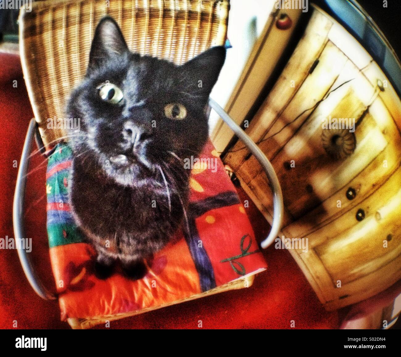 Black cat on chair - Stock Image