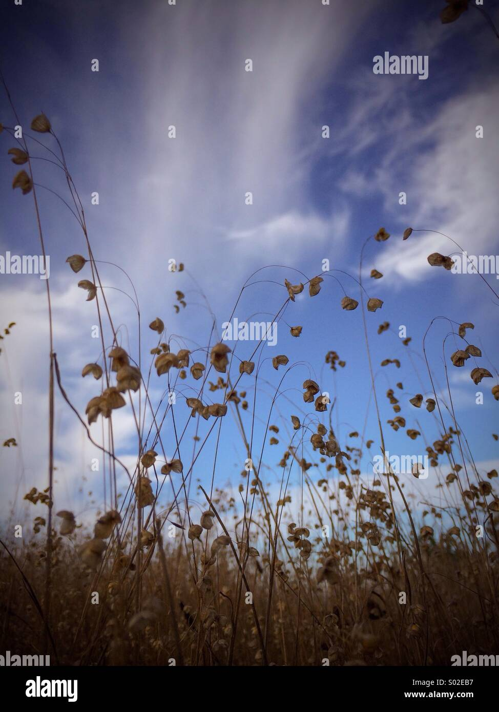 Grassy field - Stock Image