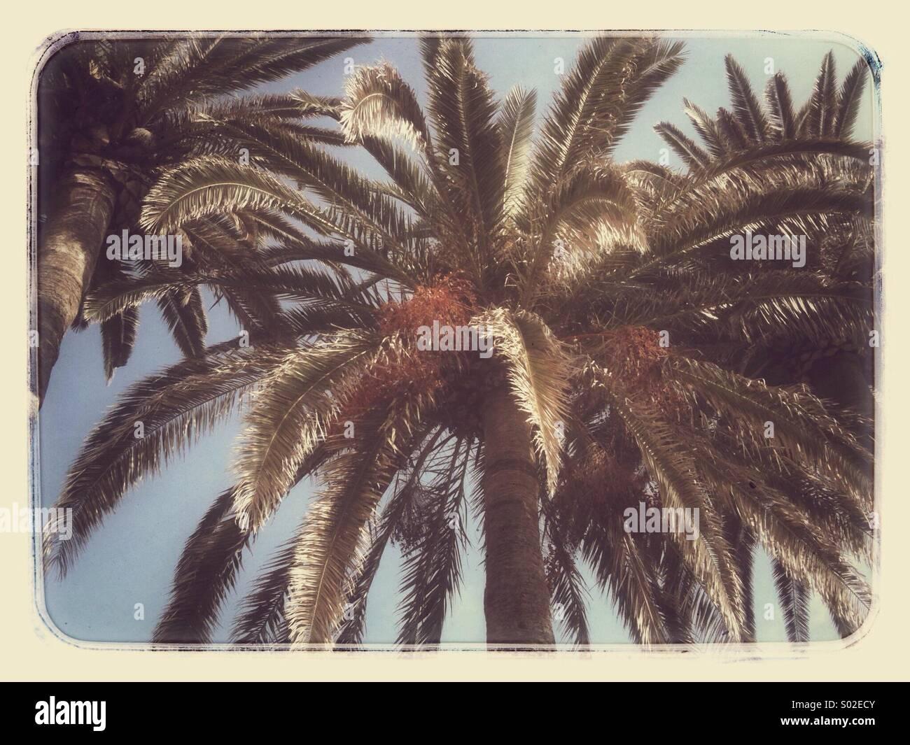 Palm tree in Nerja on the Costa Del Sol - Stock Image