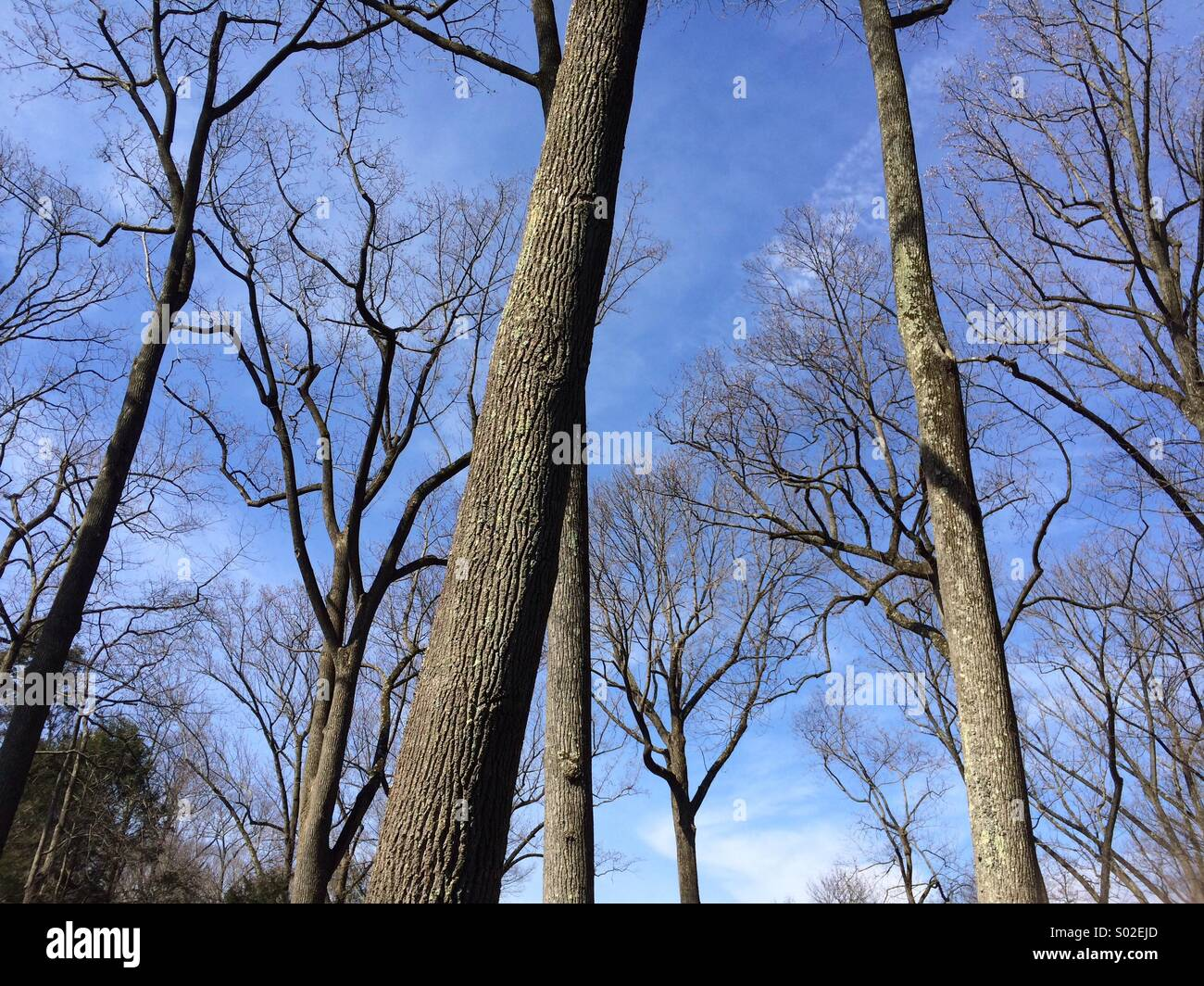 Trees in winter - Stock Image