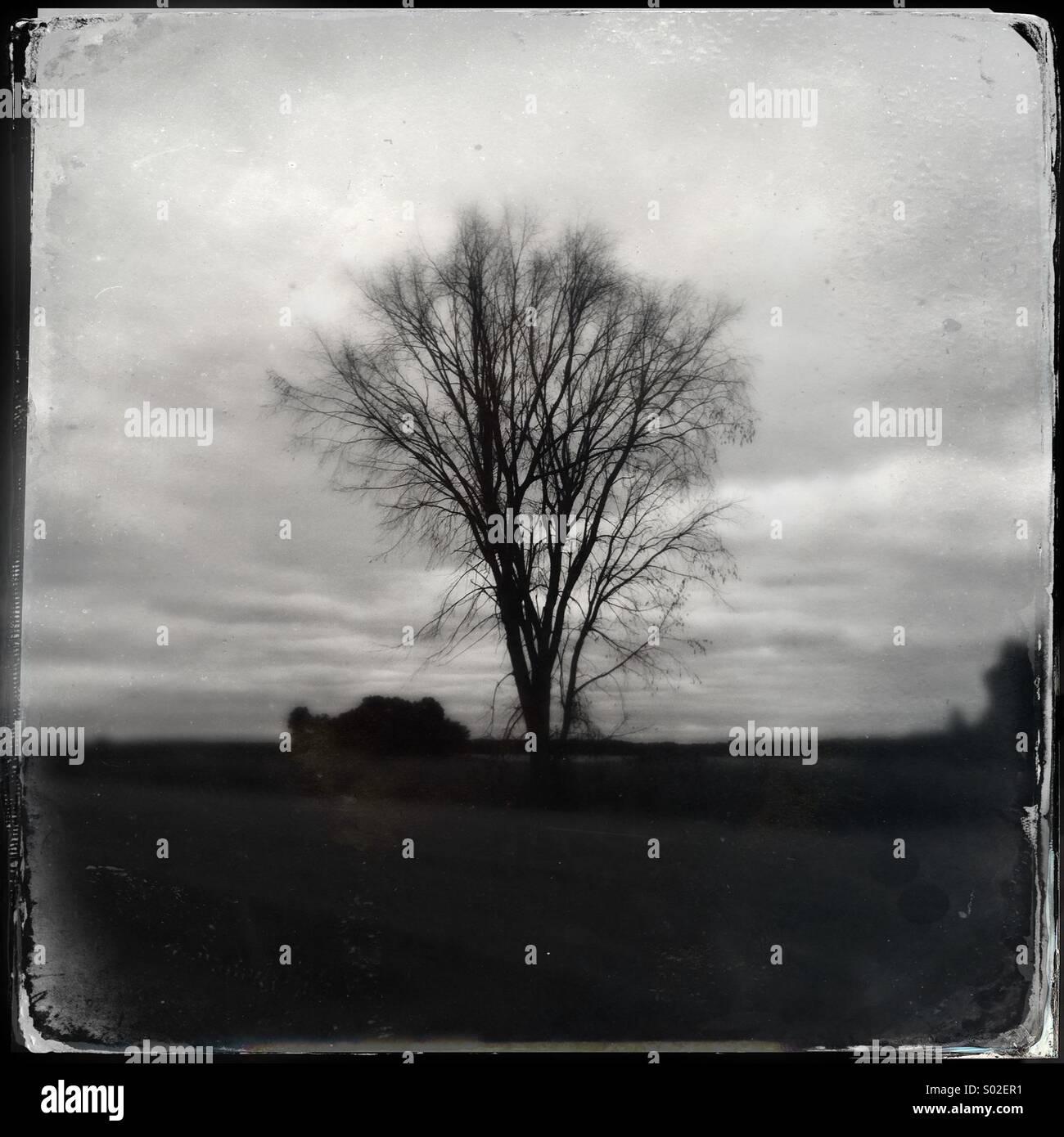 Bare Tree in Field, Ontario, Canada - Stock Image