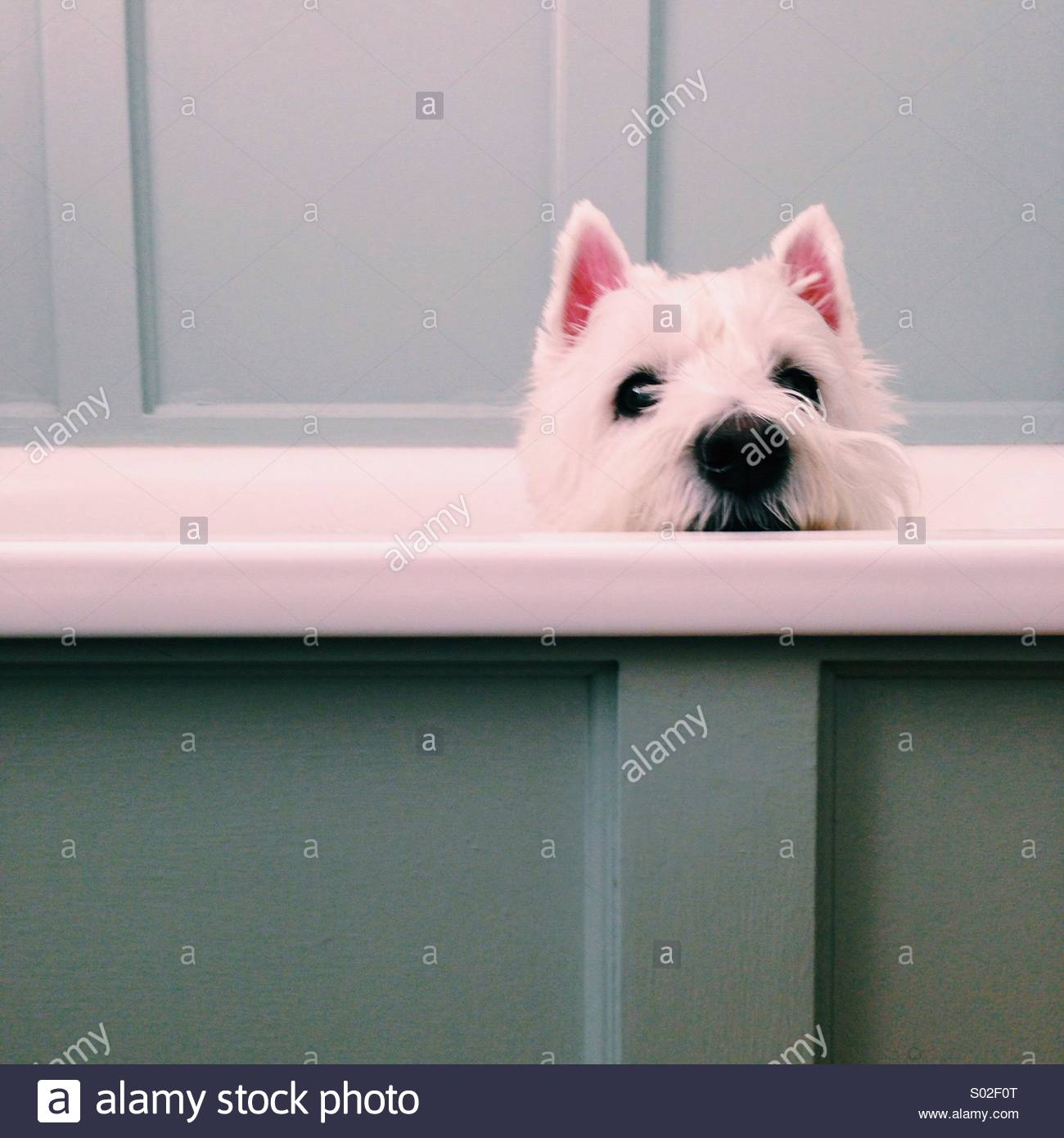 Mac in the bath 7 - Stock Image