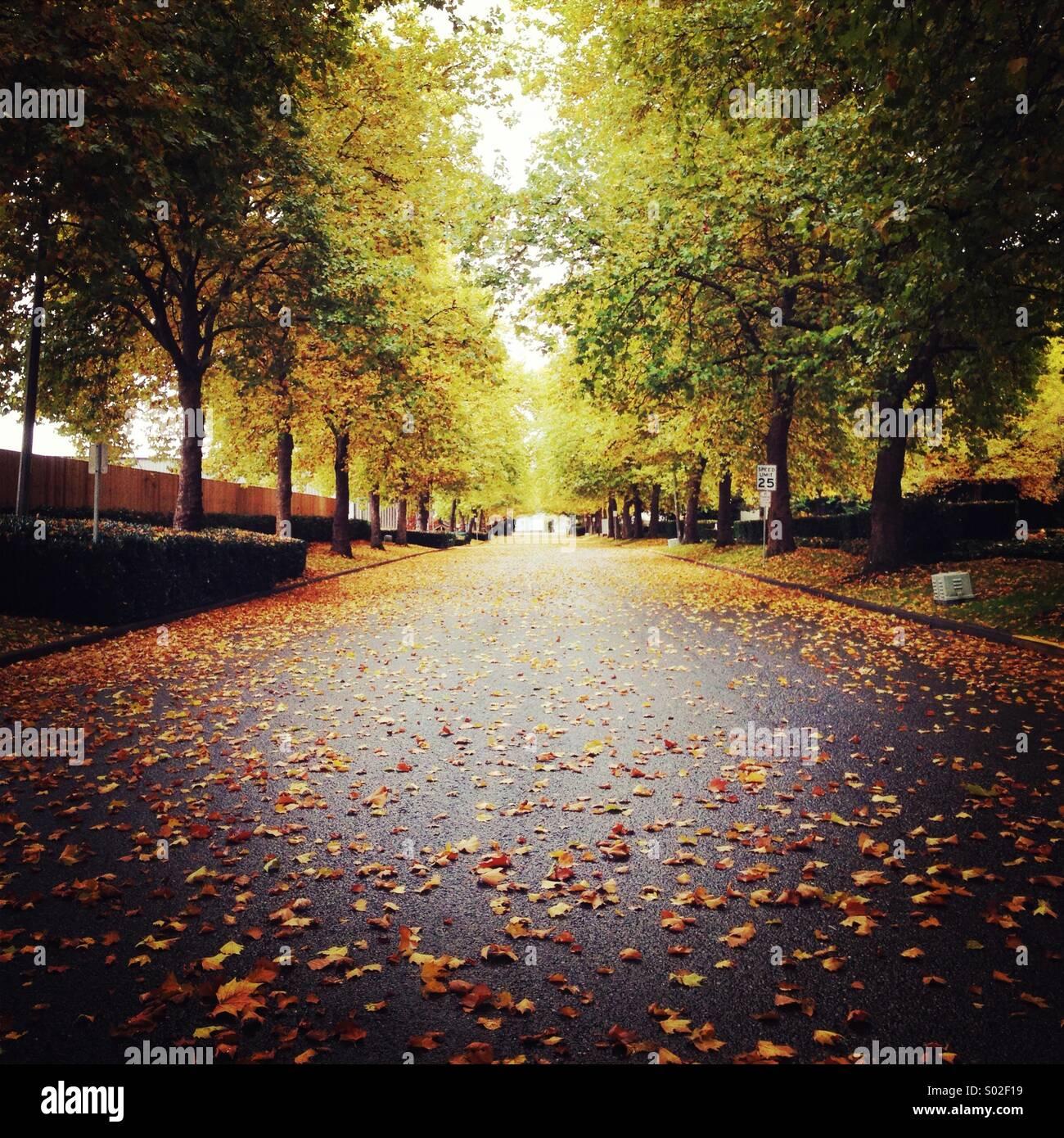 Fall avenue - Stock Image