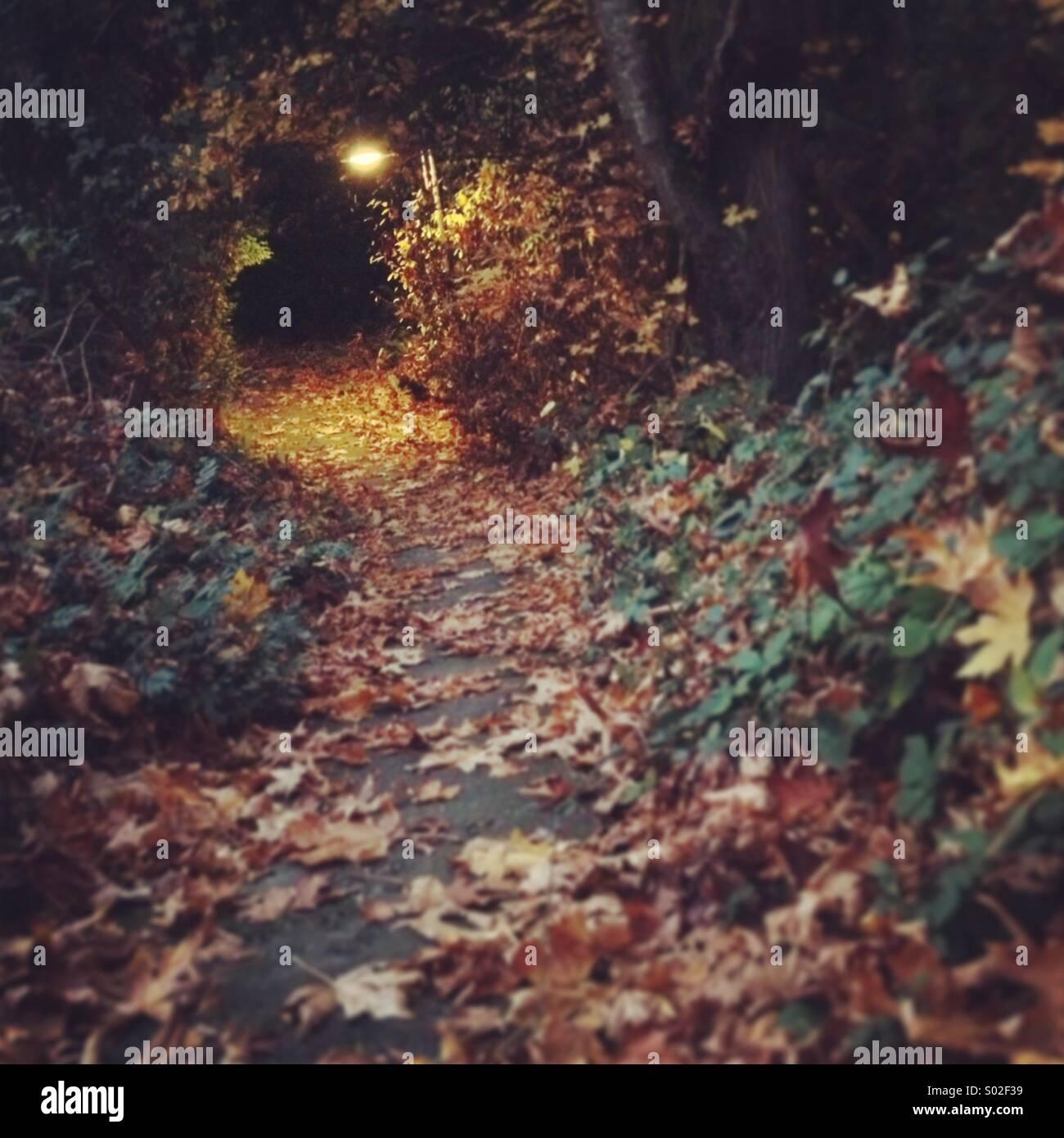Rabbit hole - Stock Image