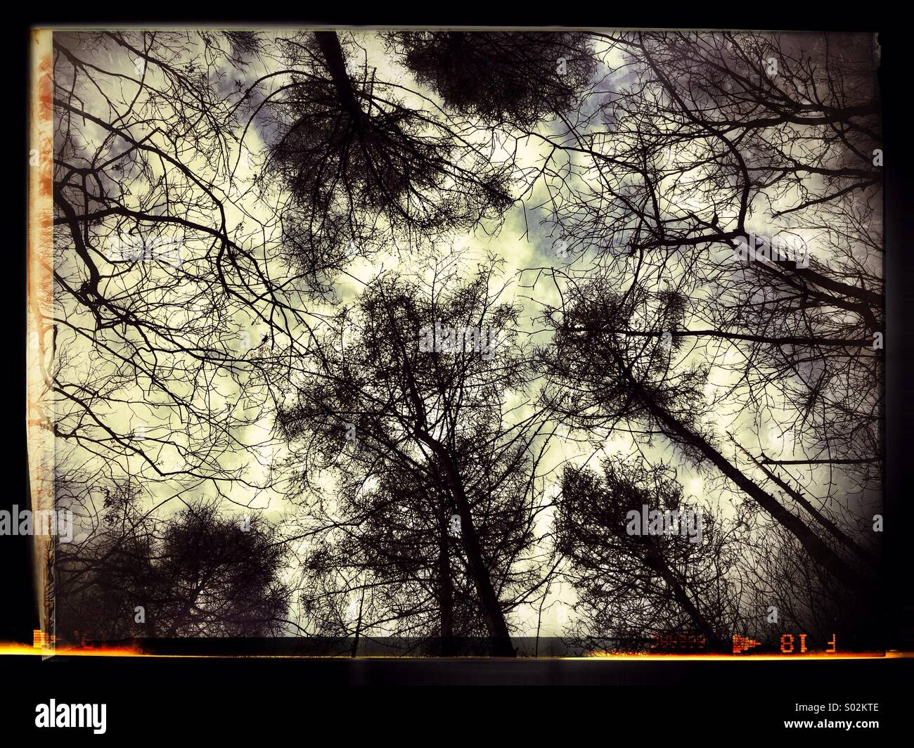 Trees in the wood - Stock Image
