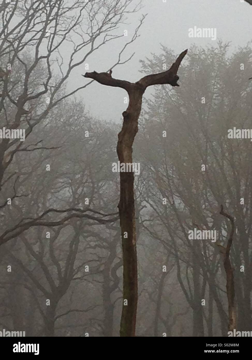 Dead tree in woods in mist with two prongs fork shaped - Stock Image