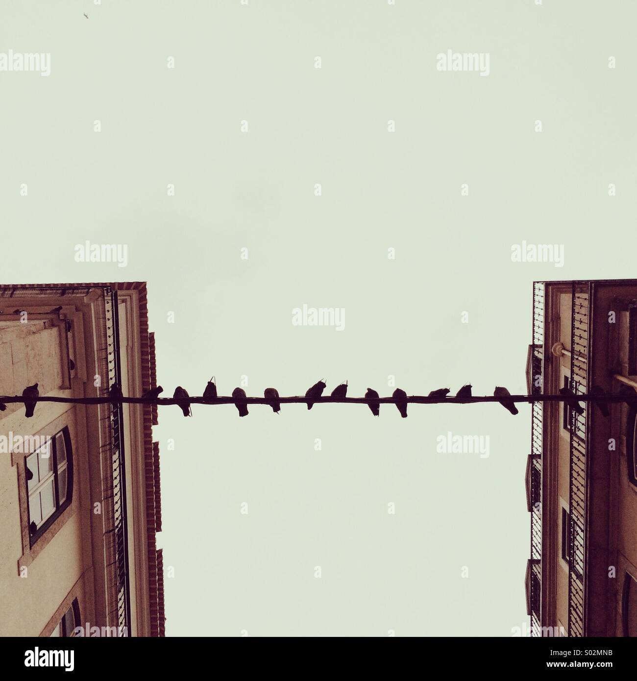Doves rest on a wire, overcast day. - Stock Image