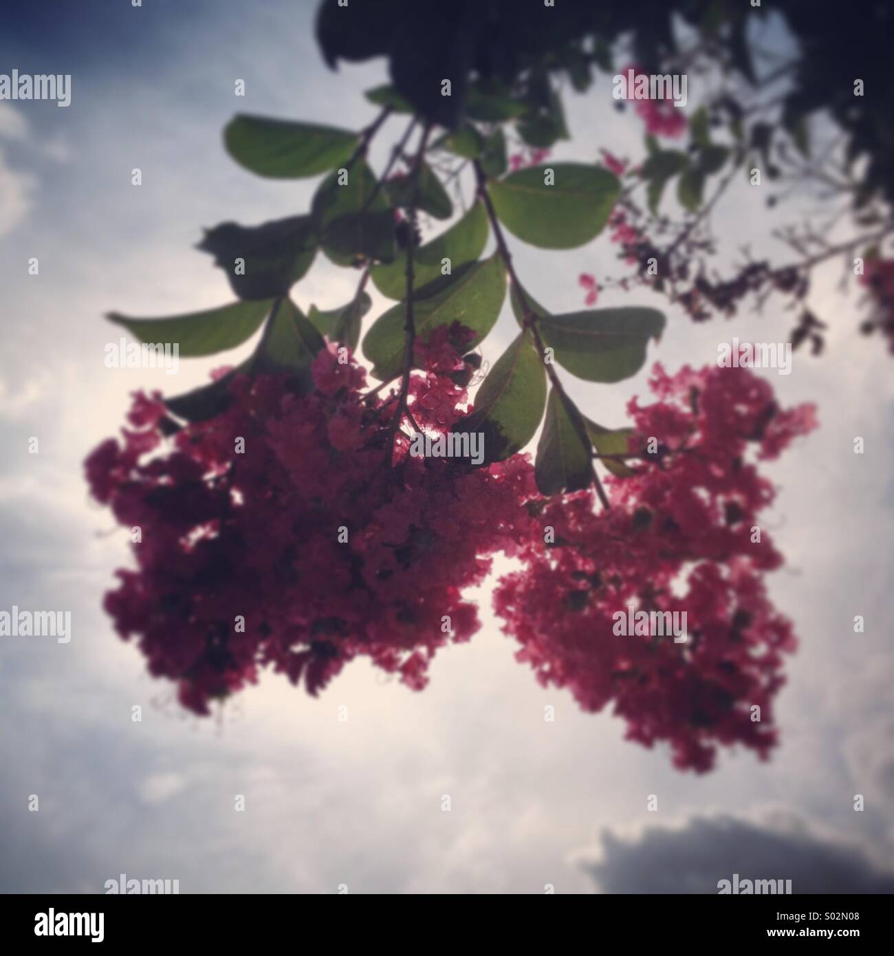 Blossoms in the spring - Stock Image