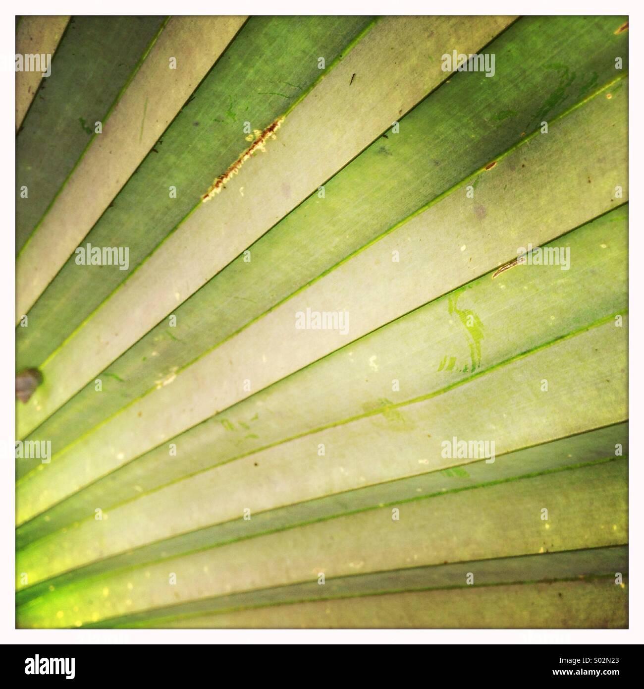 Tropical garden detail - Stock Image