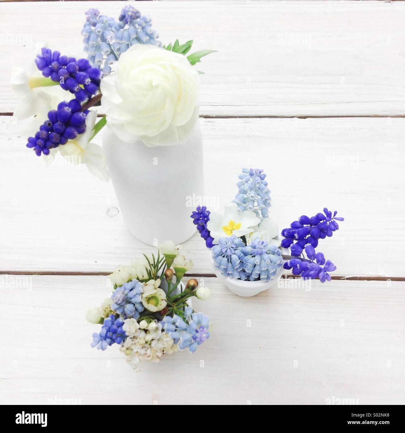 Three blue & white spring posies in white milk bottles. Blue grape hyacinths, narcissus, ranunculus, wax flowers. - Stock Image