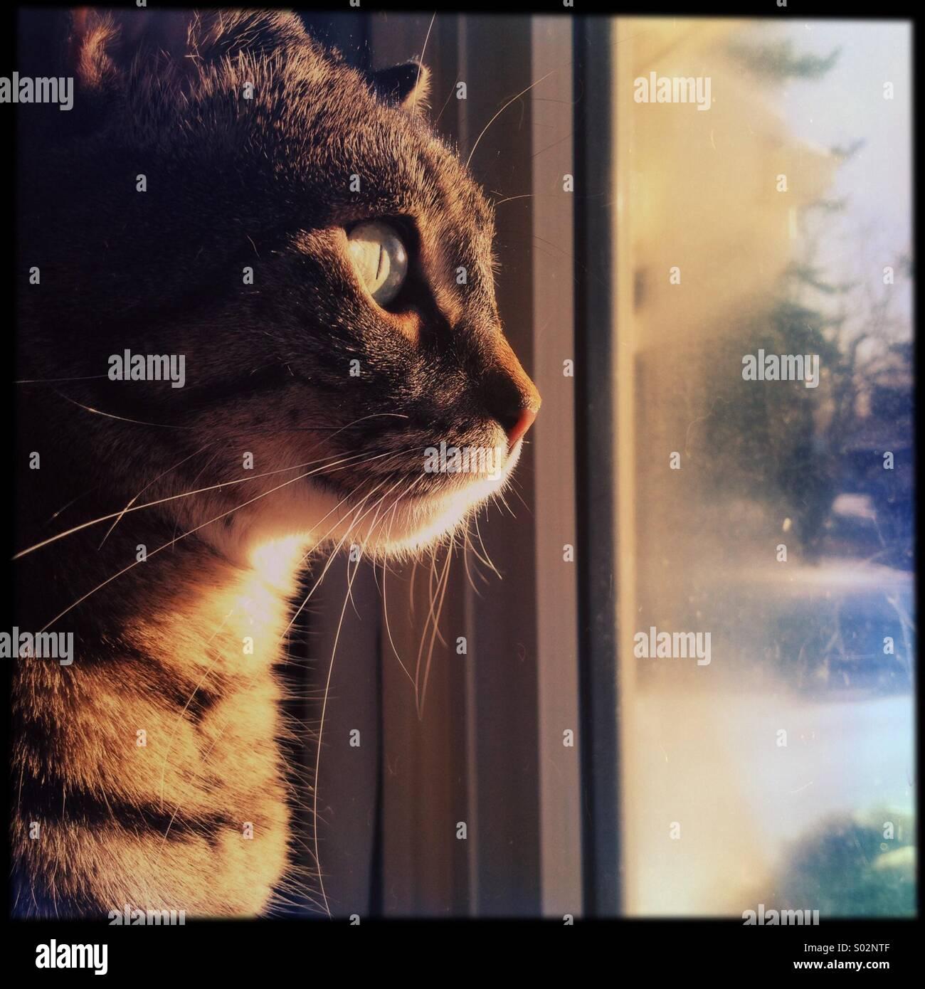 Good morning kitty - Stock Image