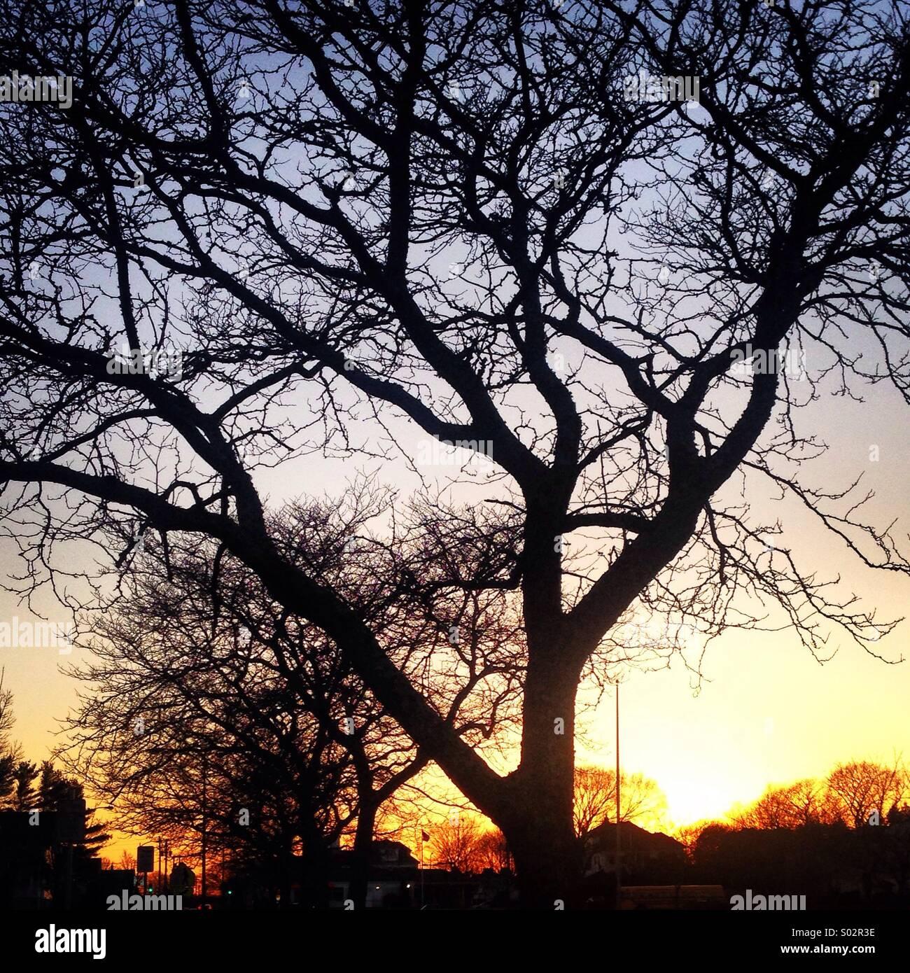 Inner city beauty - Stock Image