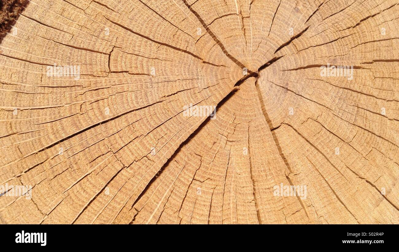 Age rings and radial cracks in tree stump (for background or texture) - Stock Image