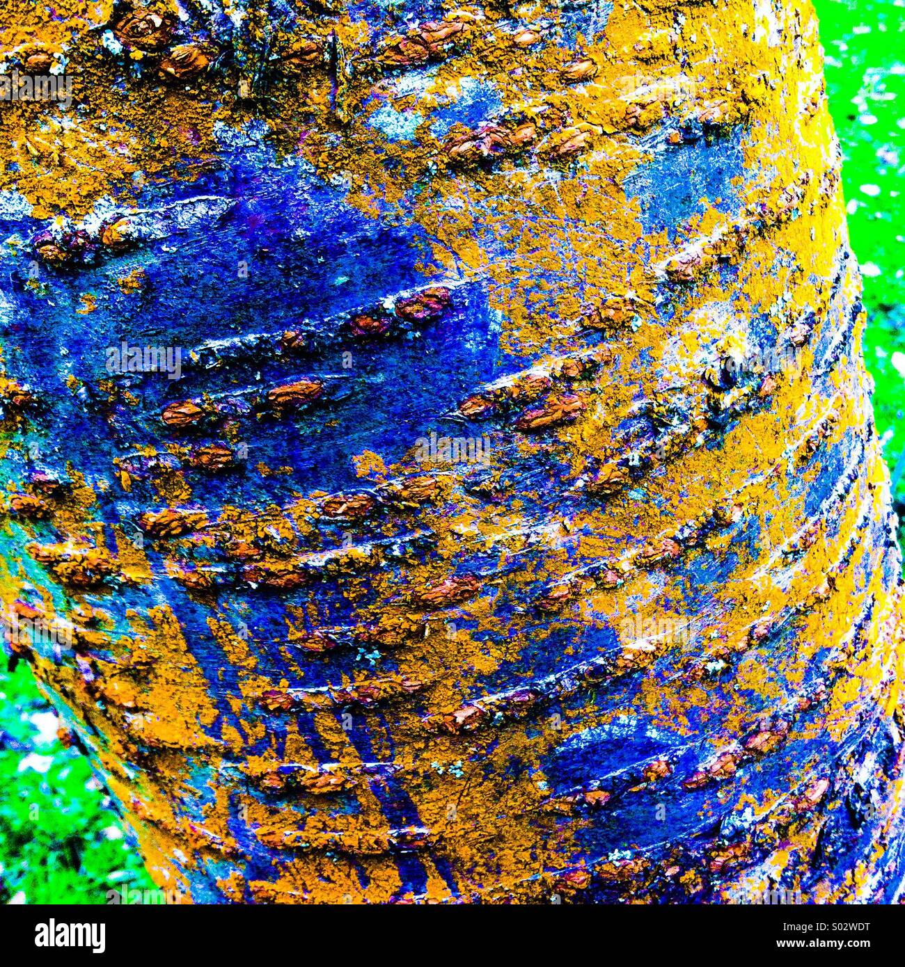 Strongly coloured bark on tree trunk - Stock Image