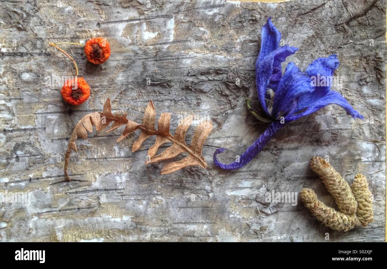 Dried flower still life - Stock Image