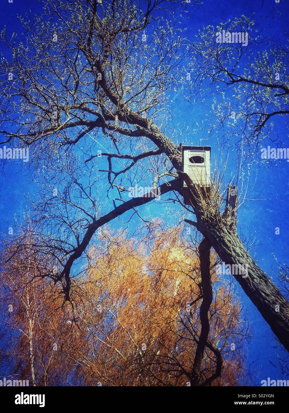 Nesting-box, attached to the tree, waiting for the birds Stock Photo