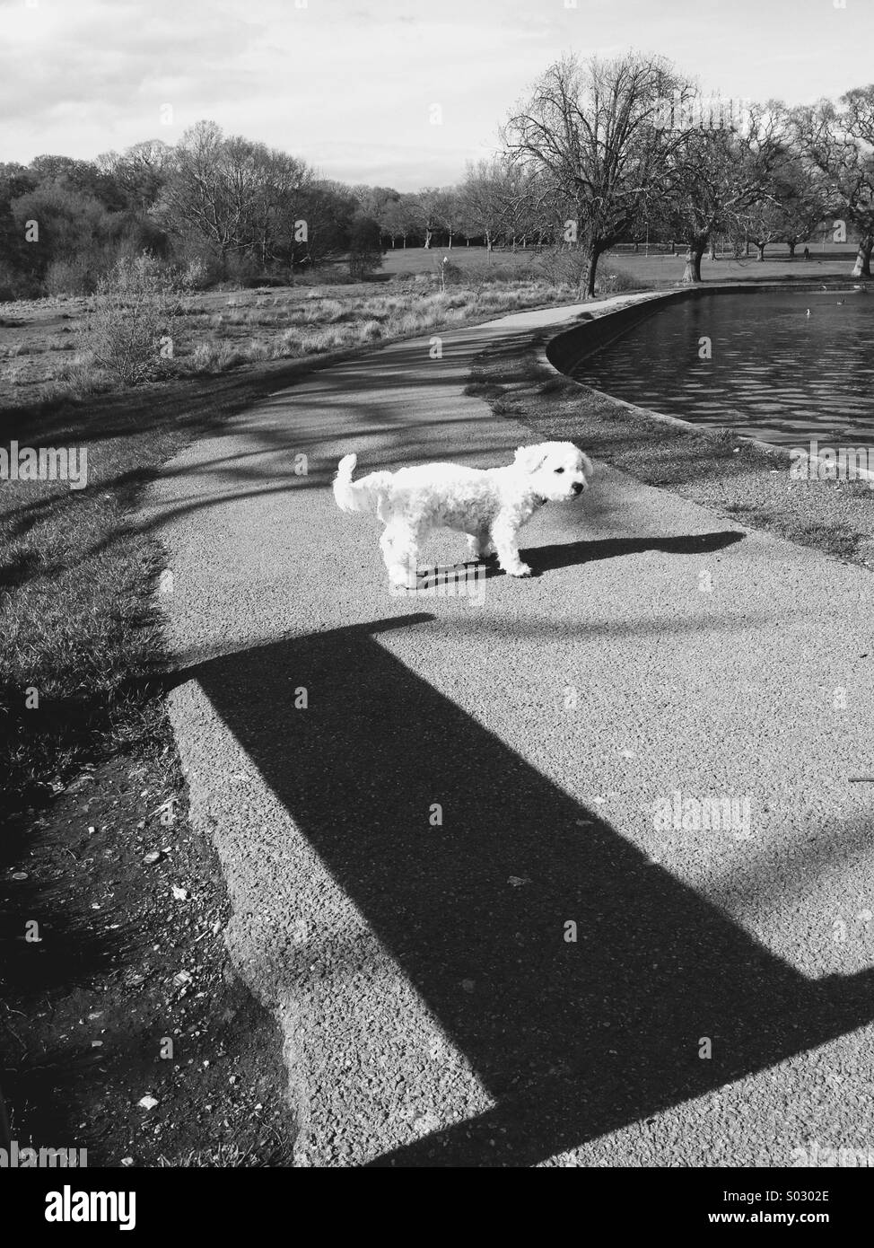 Young dog(pup) in the Common Park,Southampton. - Stock Image