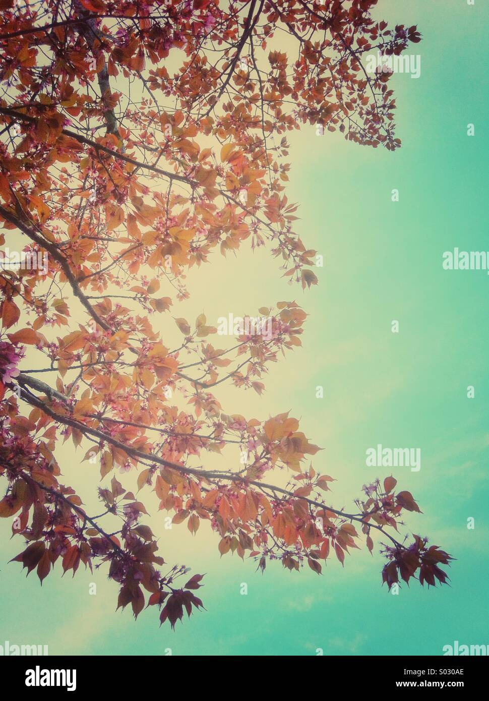 Spring flowers and leaves - Stock Image