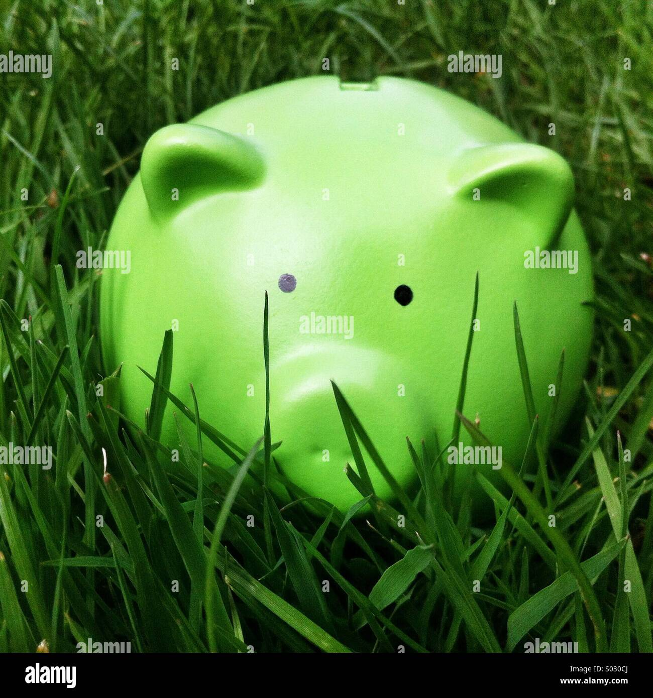 Green piggy bank money box in long green grass - Stock Image