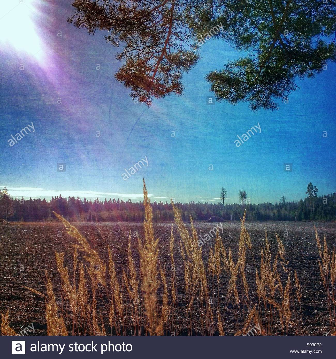 Filtered landscape - Stock Image