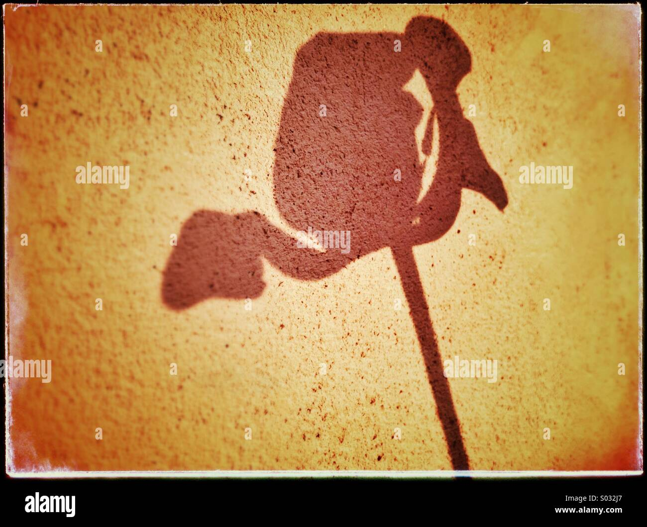 Flower shadow - Stock Image