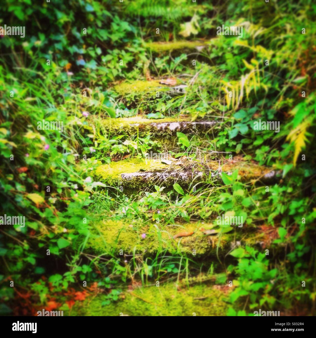 Ancient and over grown stone steps form a mysterious path in Hallstatt Austria - Stock Image