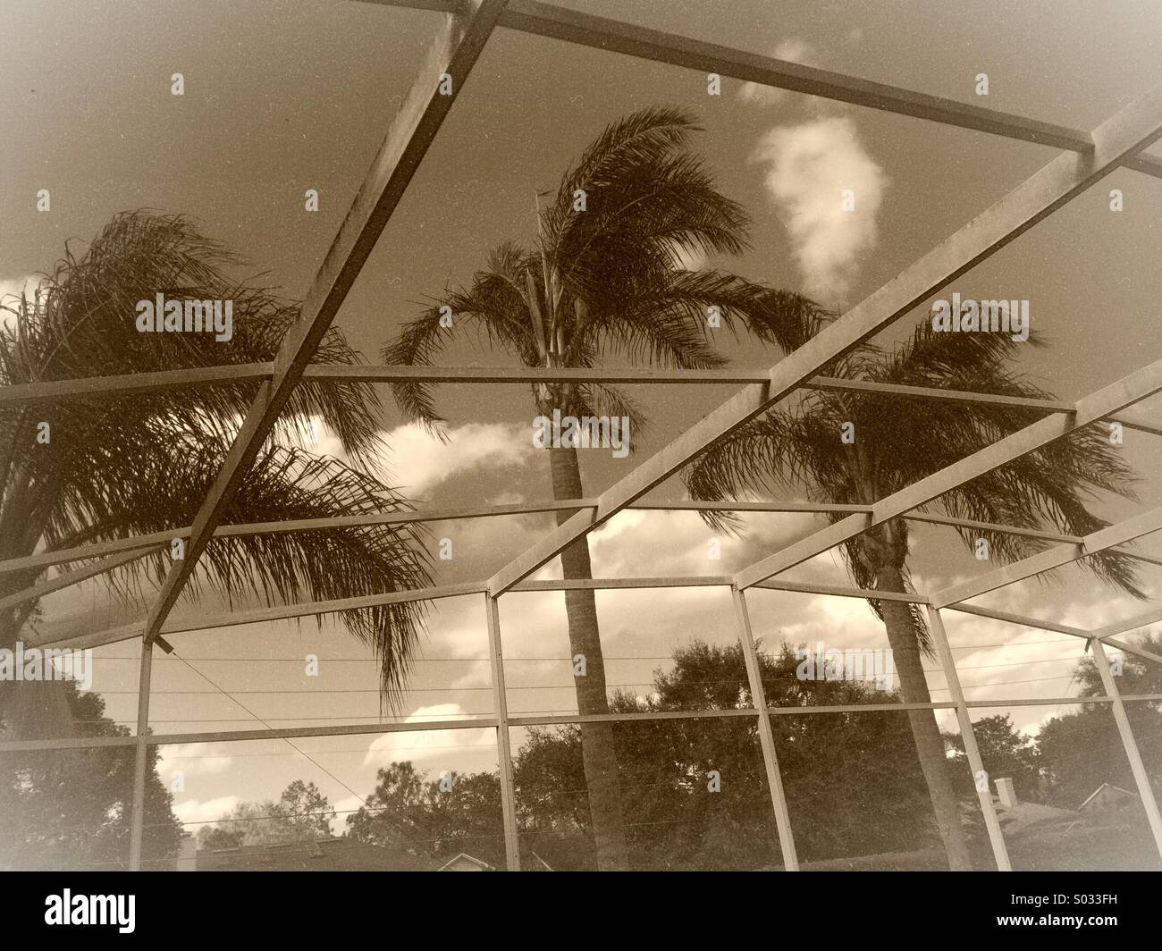 Palm trees through a patio screen in Florida - Stock Image