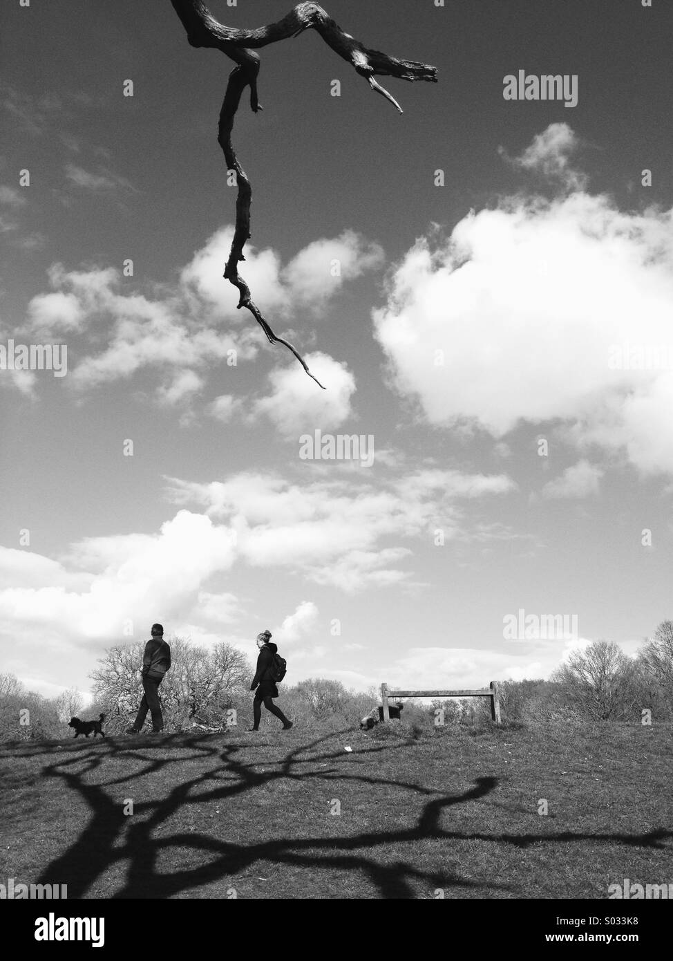 Couple walking in the park with two dogs,Southampton - Stock Image