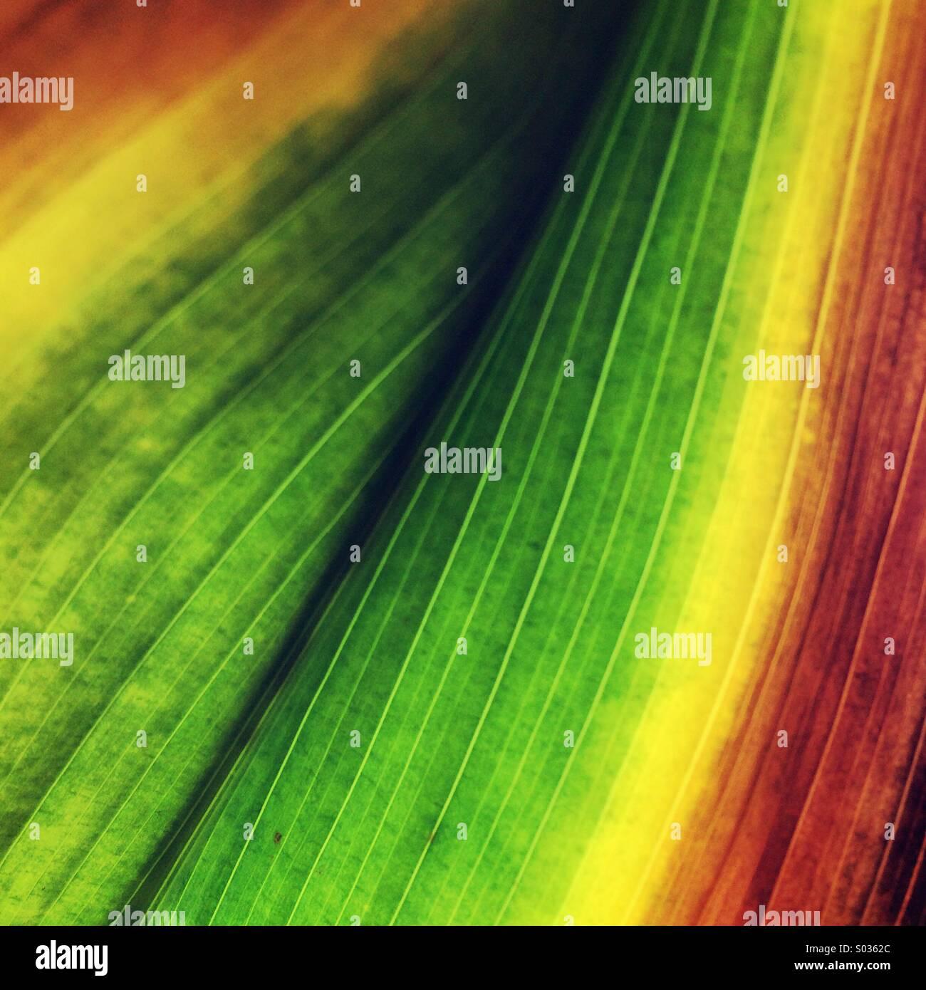 Green & orange leaf - Stock Image