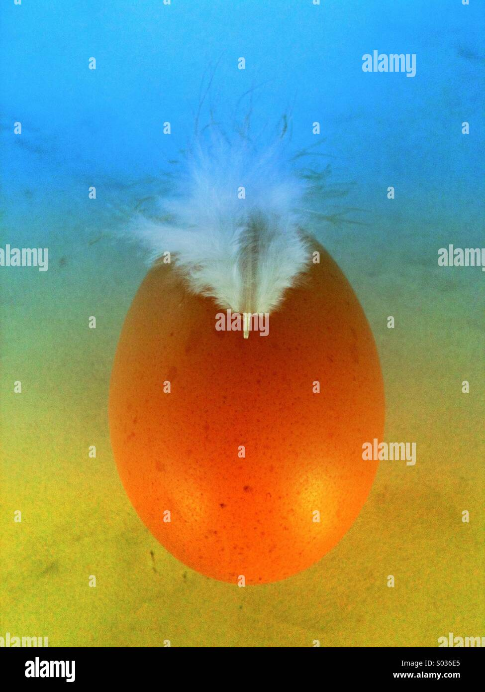 Shell egg and feather using art filter. - Stock Image