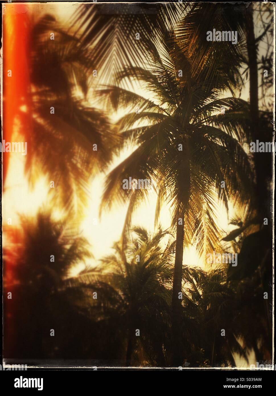Palm trees and sunset - Stock Image