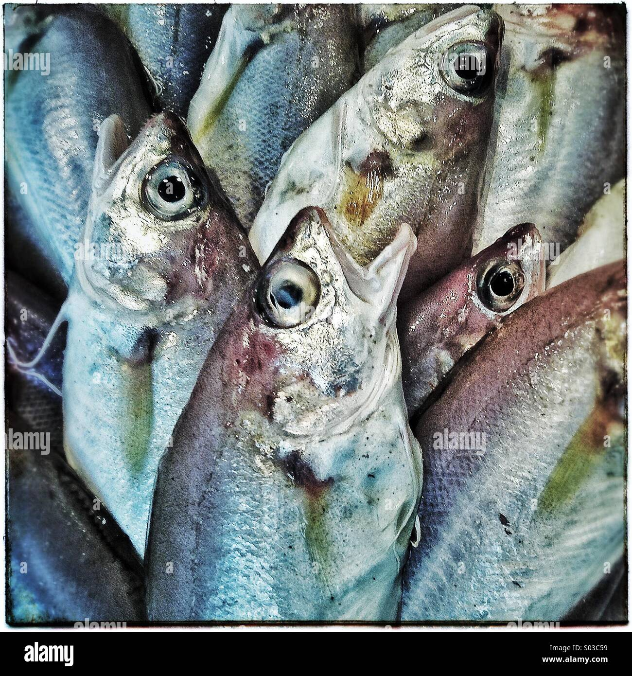 Fresh fishes for sale - Stock Image