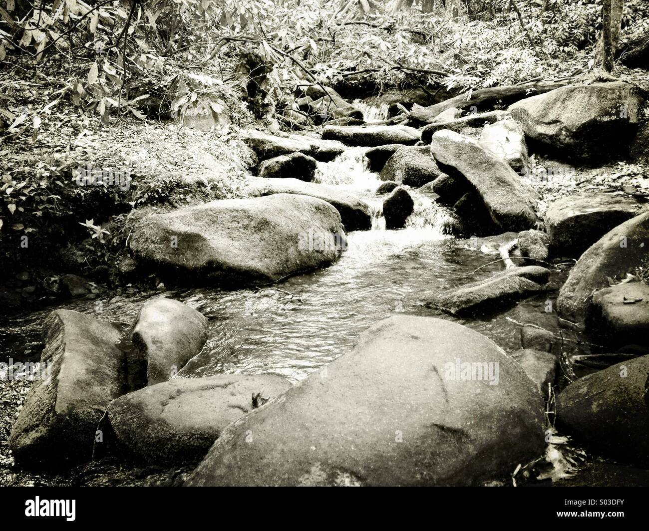 A cool mountain stream gently flows through a lush unspoiled forest. - Stock Image