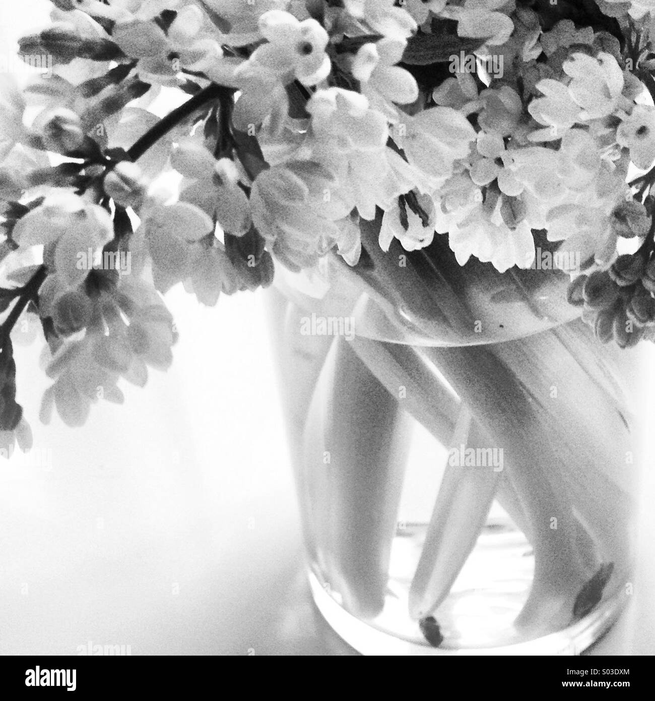 Wedding Flowers Black And White Stock Photos Images Alamy