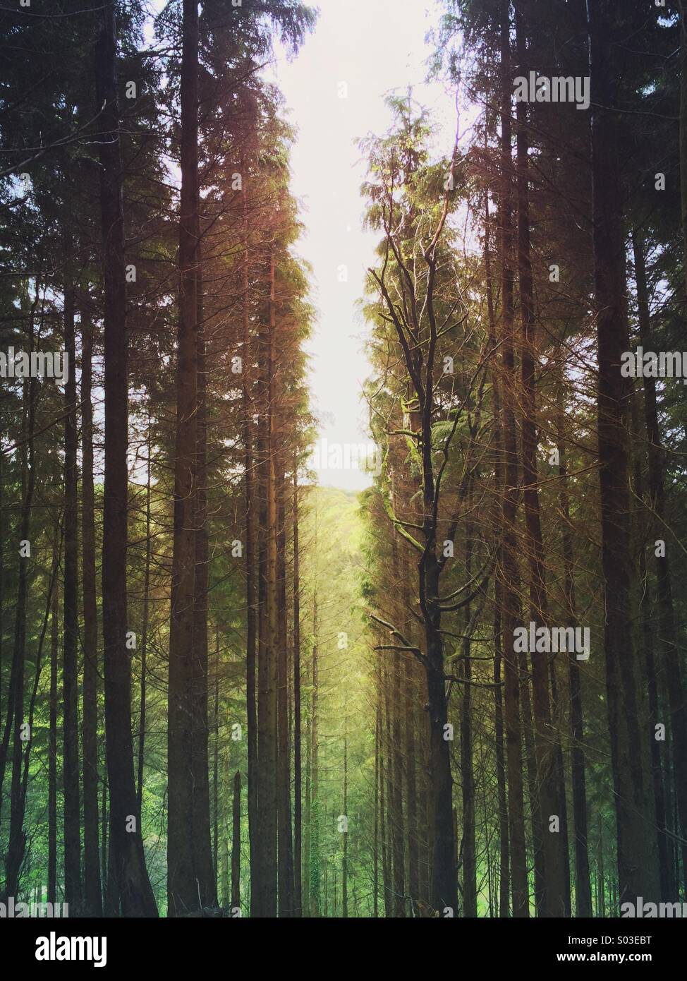 Space and sunlight through a break in the forest. - Stock Image
