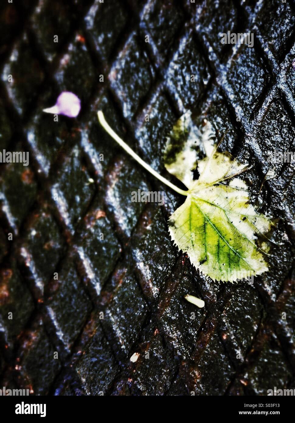 fallen leaf - Stock Image