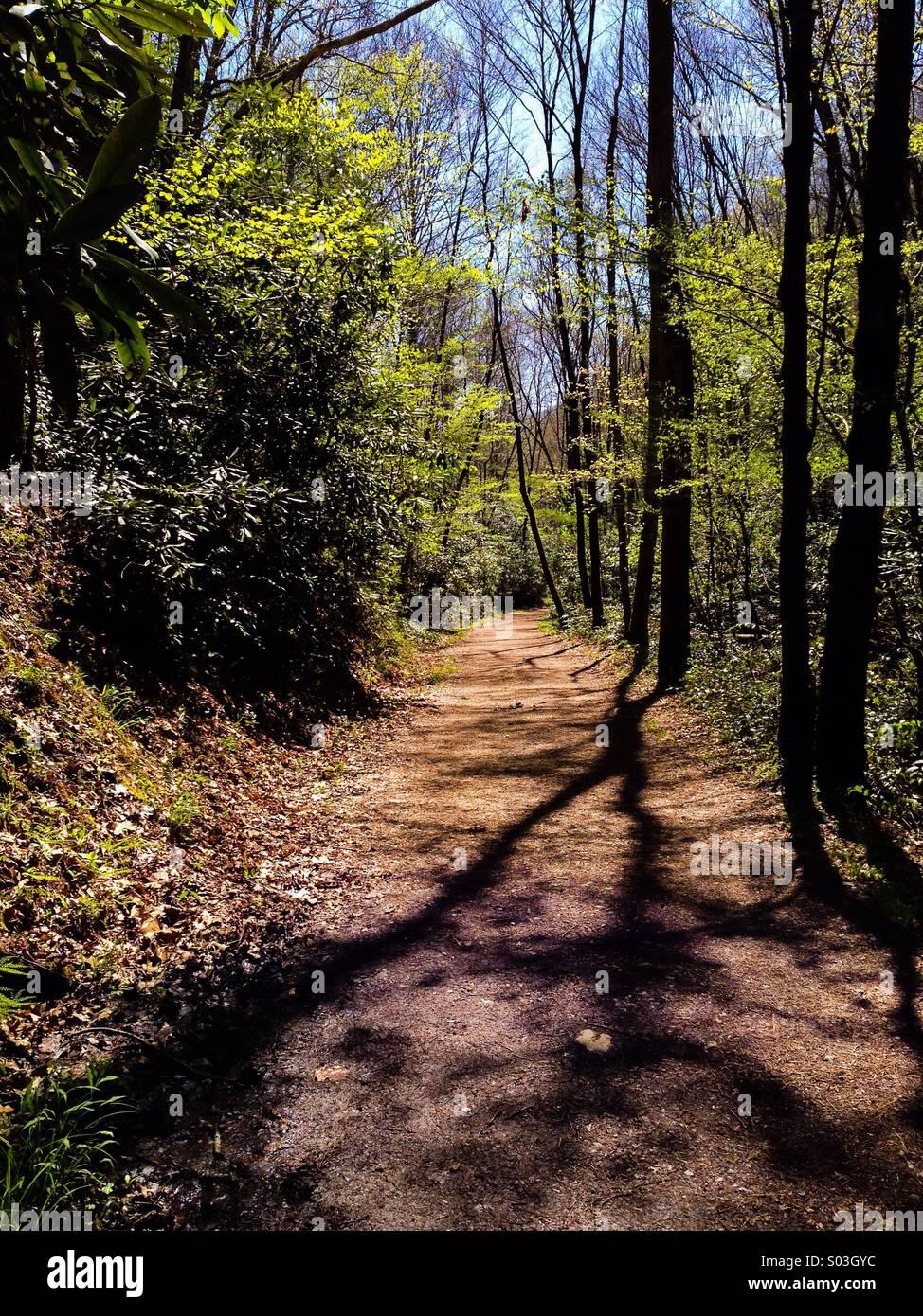Schoolhouse Gap Trail, Smokies - Stock Image