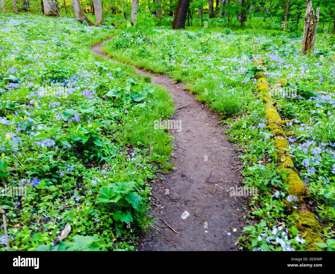 Path in Whiteoak Sink, Smokies - Stock Image