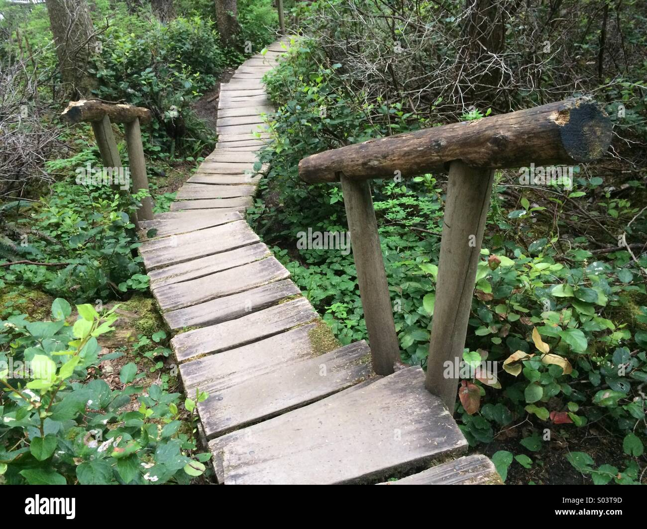 Cape Flattery trail, boardwalk, NW point for lower 48 states, Makah Tribal Lands, Neah Bay, Washington - Stock Image