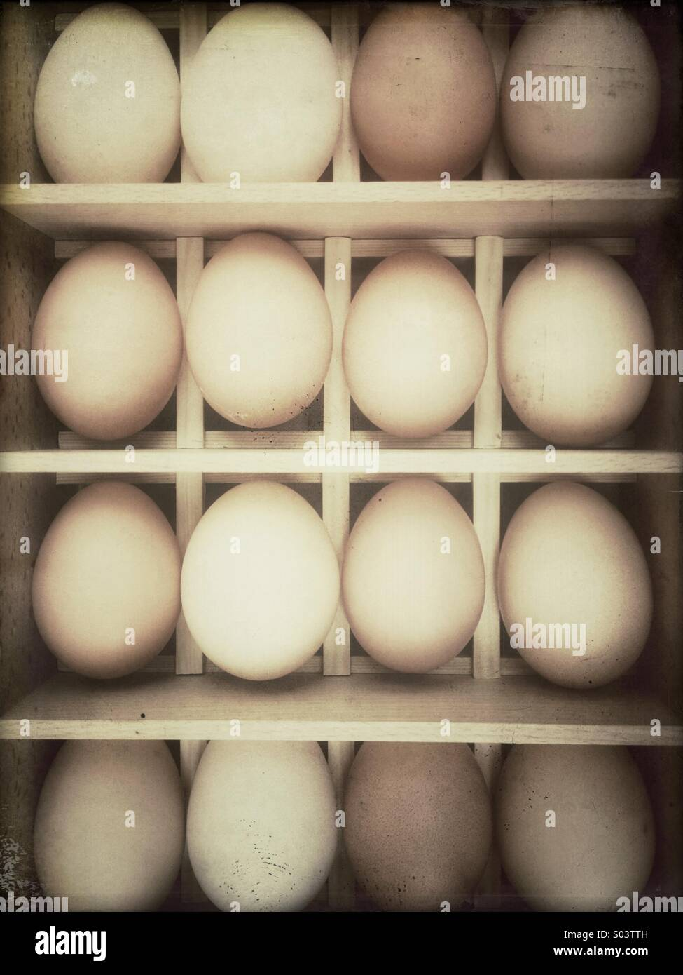 Rows of fresh chicken eggs in a wooden box - Stock Image