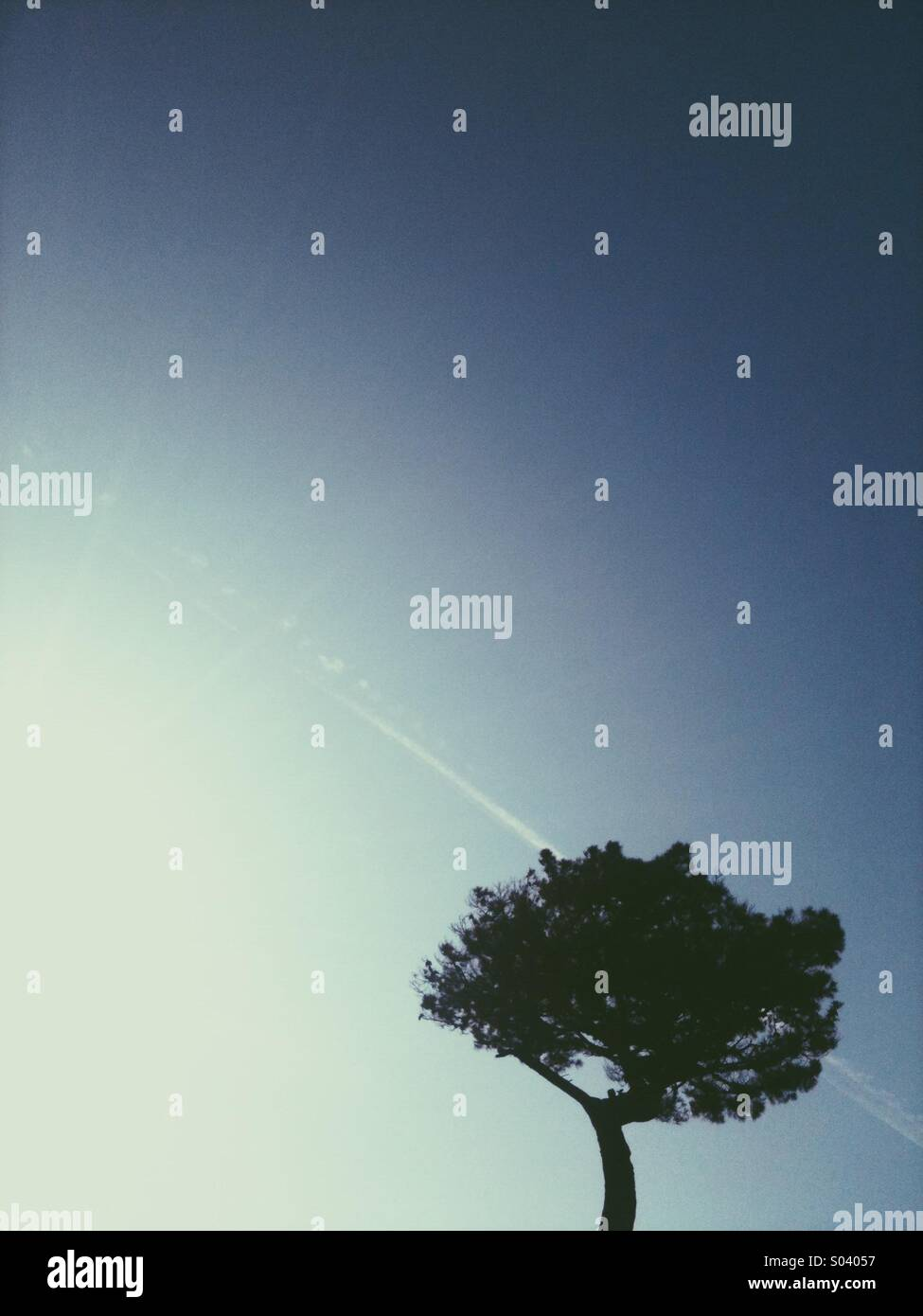 Tree and blue sky - Stock Image