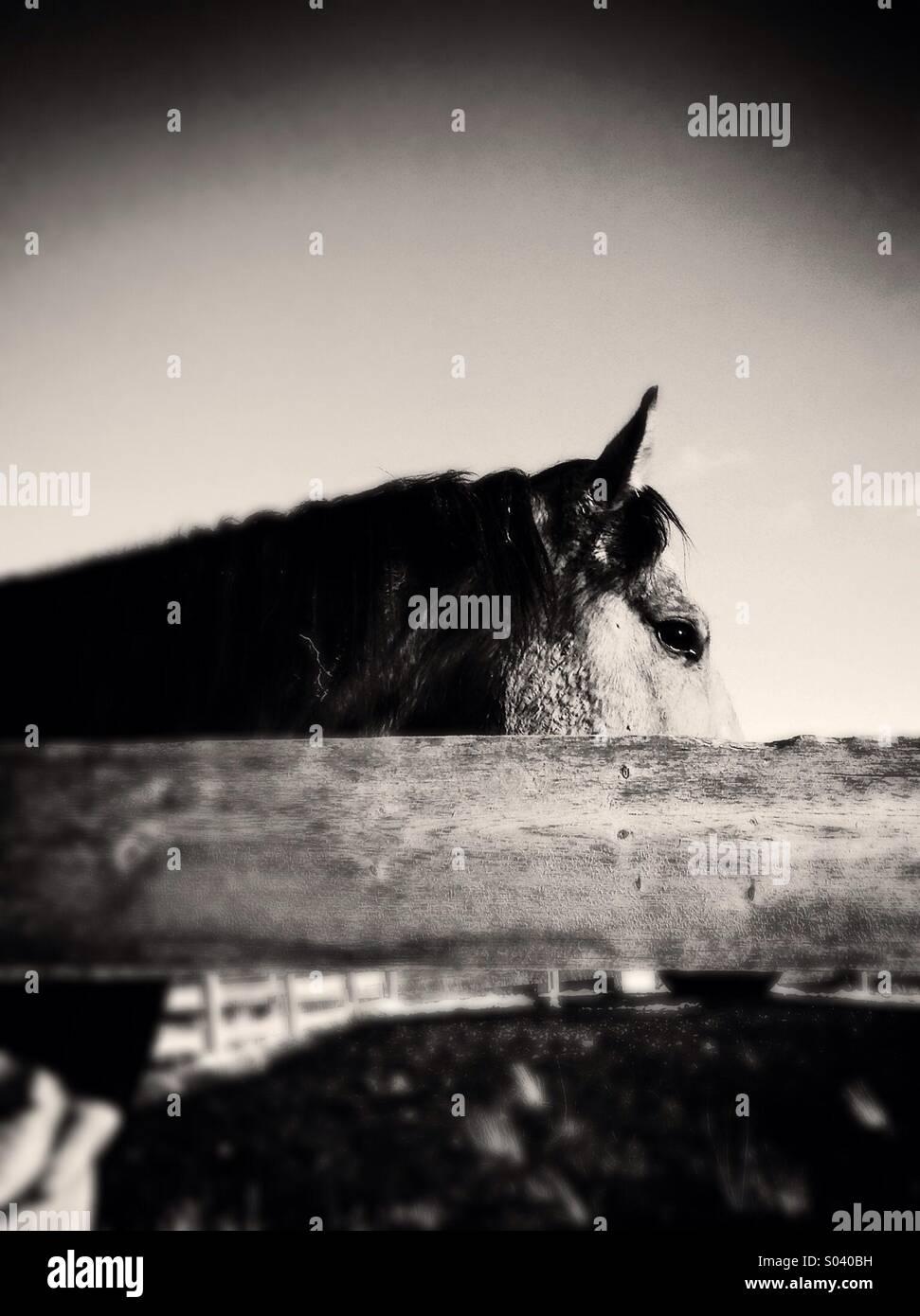 Wild West Horse - Stock Image