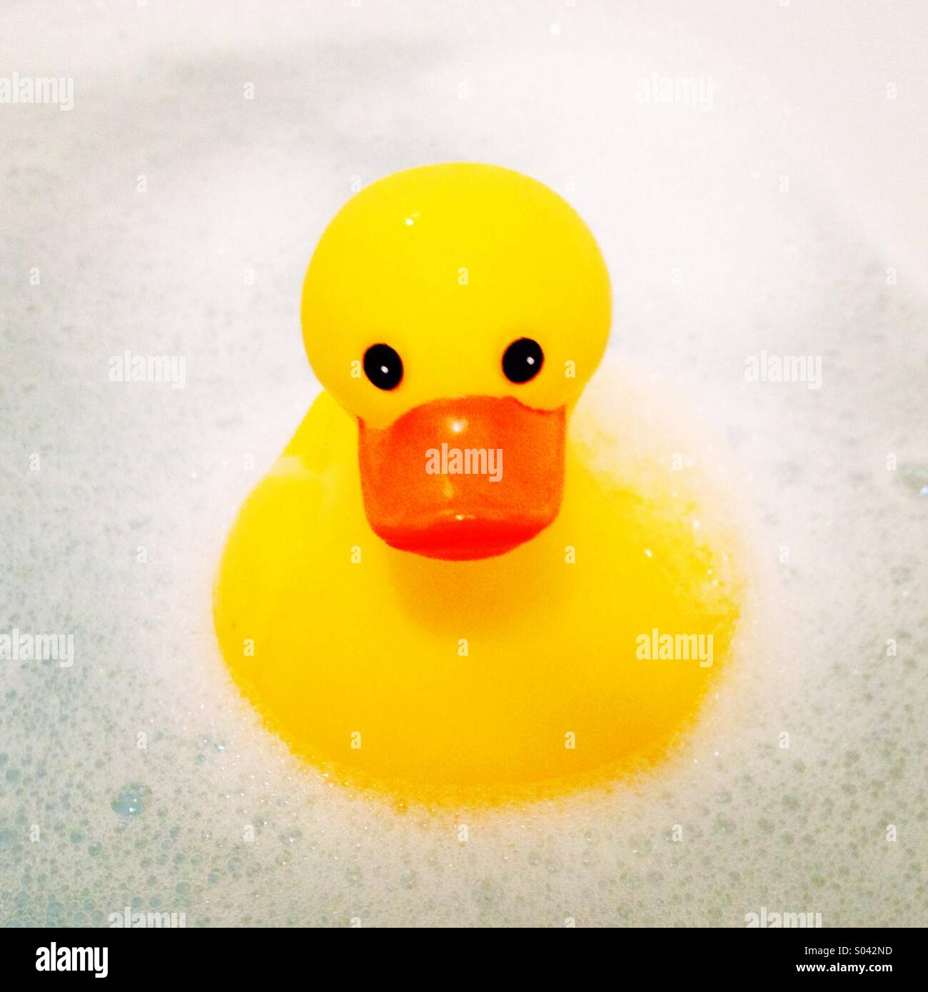 Rubber duck in suds - Stock Image