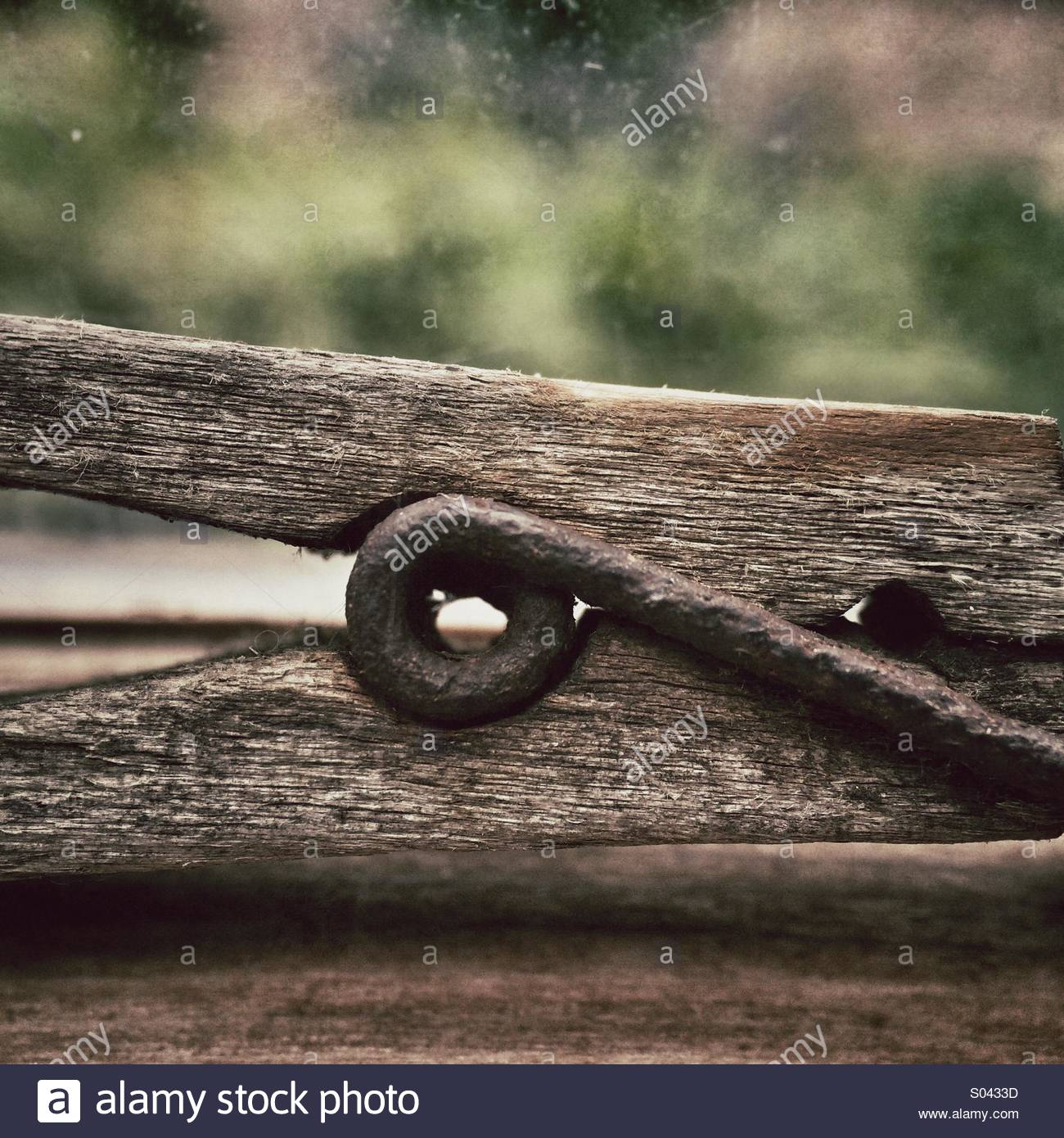 Wooden Clothes Peg Close Up - Stock Image